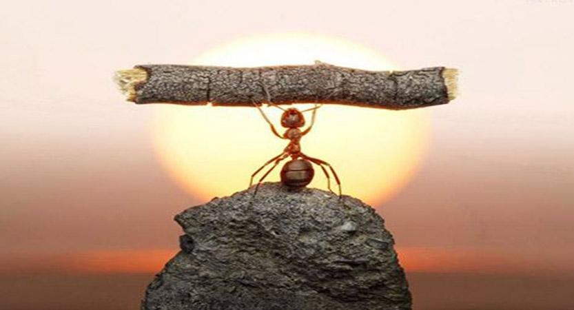 قصة النملة الذكيه مع سيدنا سليمان